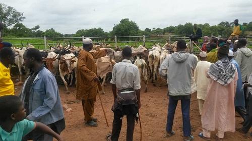 Conflits agriculteurs-éleveurs: Sur les pistes de transhumance de l'axe Fadji-Kompienga