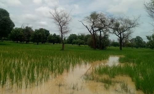 Campagne agricole: Les récoltes s'annoncent prometteuses dans la région du Nord