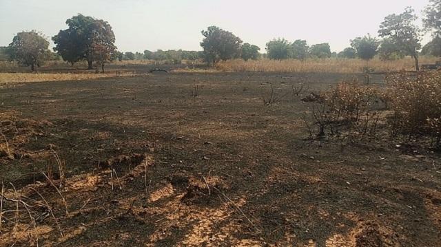 Les feux de brousse: Un phénomène à combattre