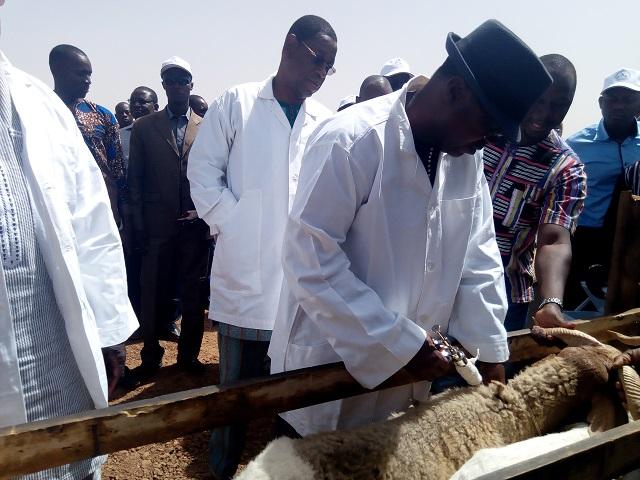 Peste des petits ruminants: La campagne nationale de vaccination lancée à Toma
