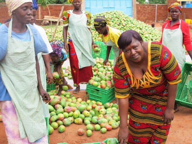 Christiane Coulibaly: La reine de la mangue séchée