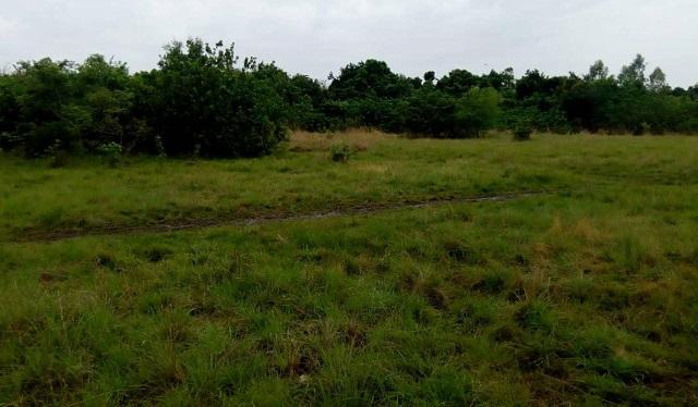 Déclassement de la forêt de Kua: «Une des potentialités de cette forêt, c'est l'existence des sources d'eau», selon un inspecteur des eaux et forêts